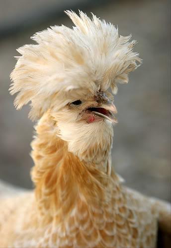 Skunk Chicken??
